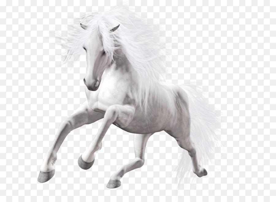 American Paint Horse Pony Stallion White Clip Art