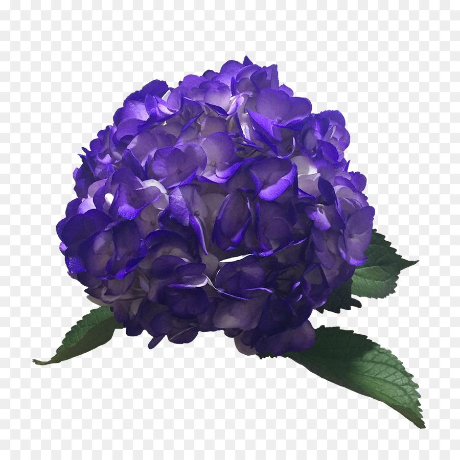 Hortensia De Color Purpura De La Lavanda Azul Hortensia Png Dibujo - Color-hortensia