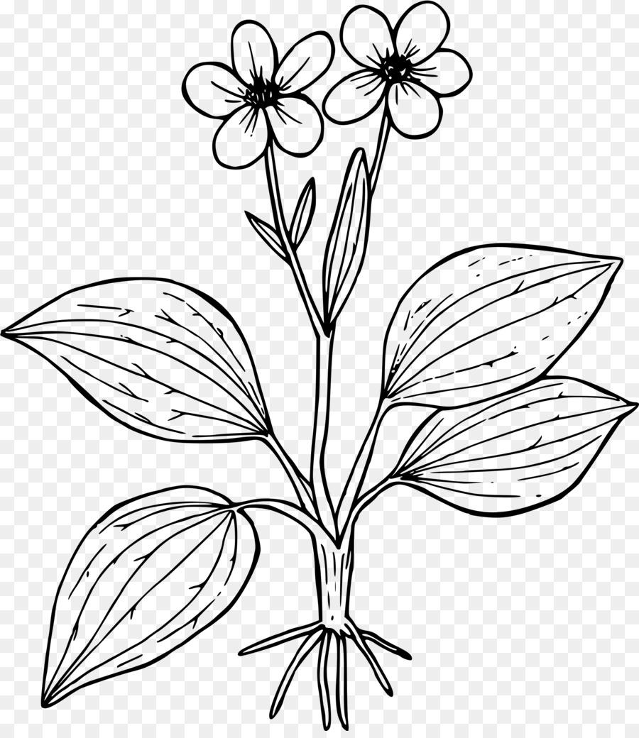 Boyama Kitabı çiçek Sayfası Düğünçiçeği Glaberrimus Küçük Resim