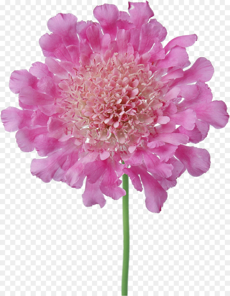 Pink Flowers Photography Long Flower Png Download 9321200