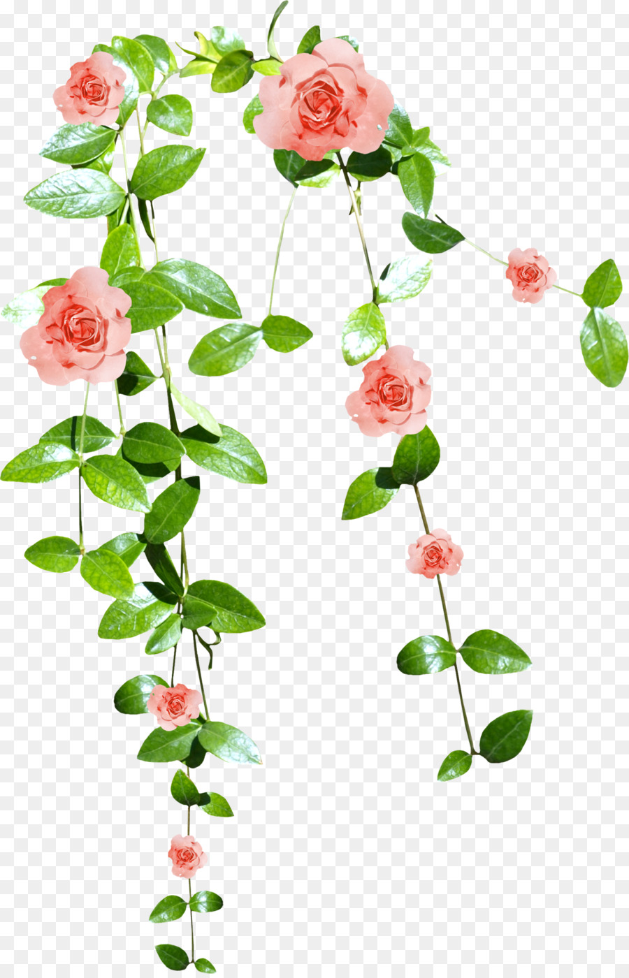 Pink Flowers Watercolor Painting Clip Art Flower Vine Png Download