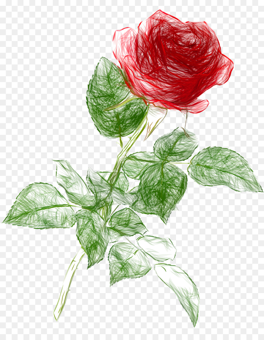 Rose Drawing Clip Art Doodle Png Download 1246 1600 Free