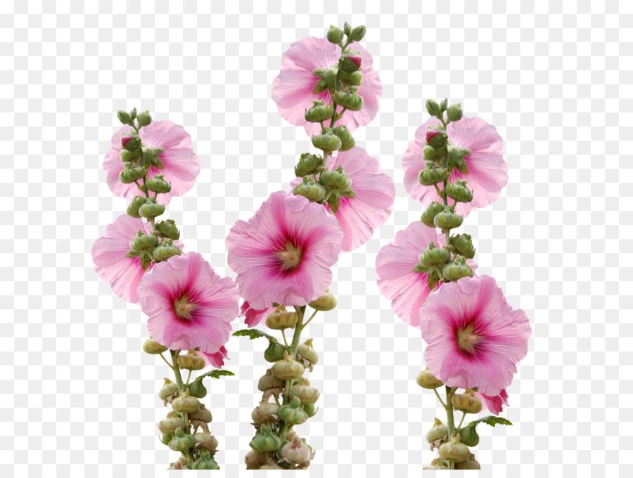 Cut flowers hollyhocks mallow wild flowers png download 1280950 cut flowers hollyhocks mallow wild flowers mightylinksfo