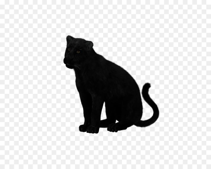 Cougar like black