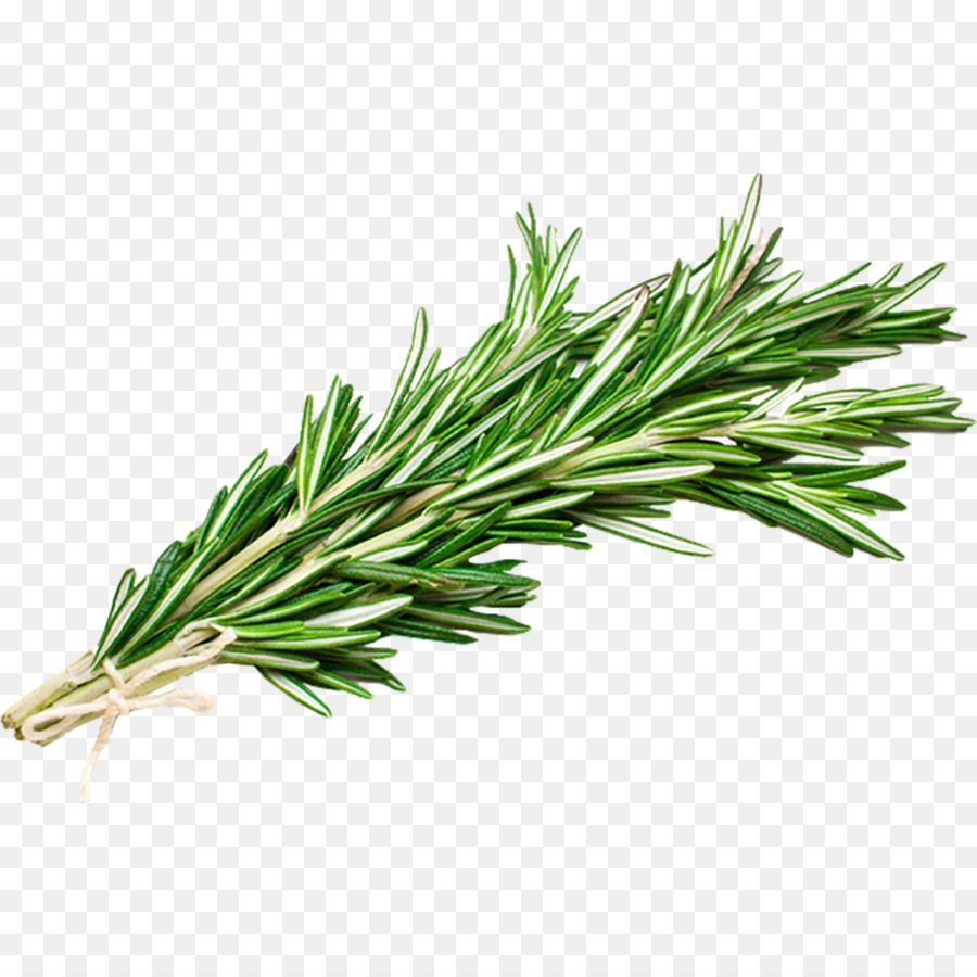 how to make rosemary essential oil from fresh rosemary