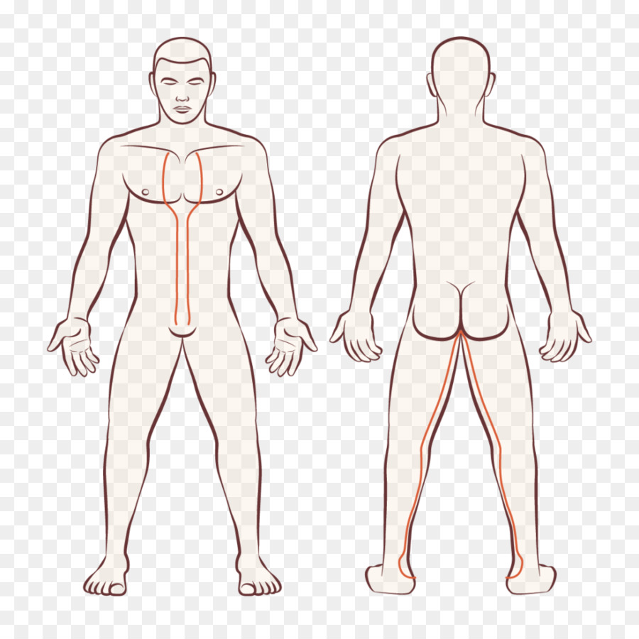 Human Body Female Body Shape Anatomy Kidney Png Download 1024