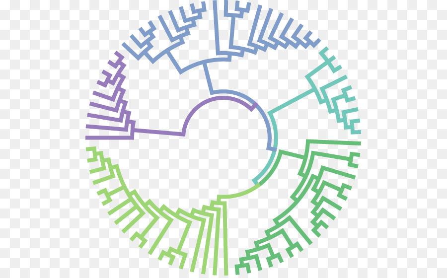 Molecular Evolution Phylogeic Tree Biology. Molecular Evolution Phylogeic Tree Biology Phylogeics. Worksheet. Phylogeic Tree Worksheet At Mspartners.co