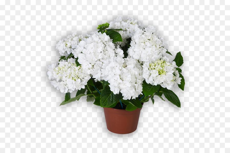 Cut flowers french hydrangea white shrub blumen png download 600 cut flowers french hydrangea white shrub blumen mightylinksfo
