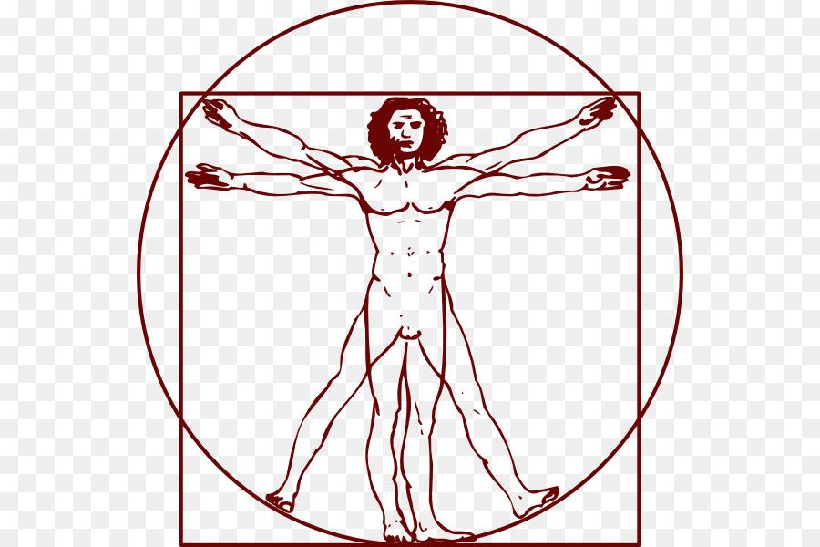 Hombre de vitruvio Clip art - anatomía Formatos De Archivo De Imagen ...