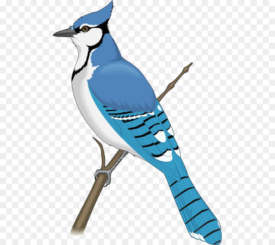 blue jay clip art blue bird png download 553 800 free rh kisspng com