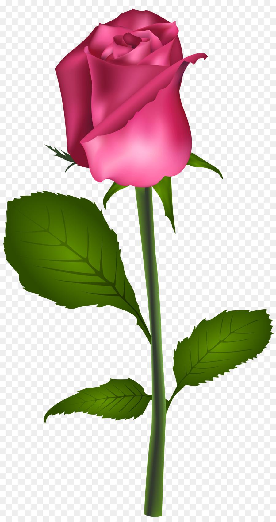 Blue Rose Flower Best Roses Clip Art Pink Rose Png Download 4241