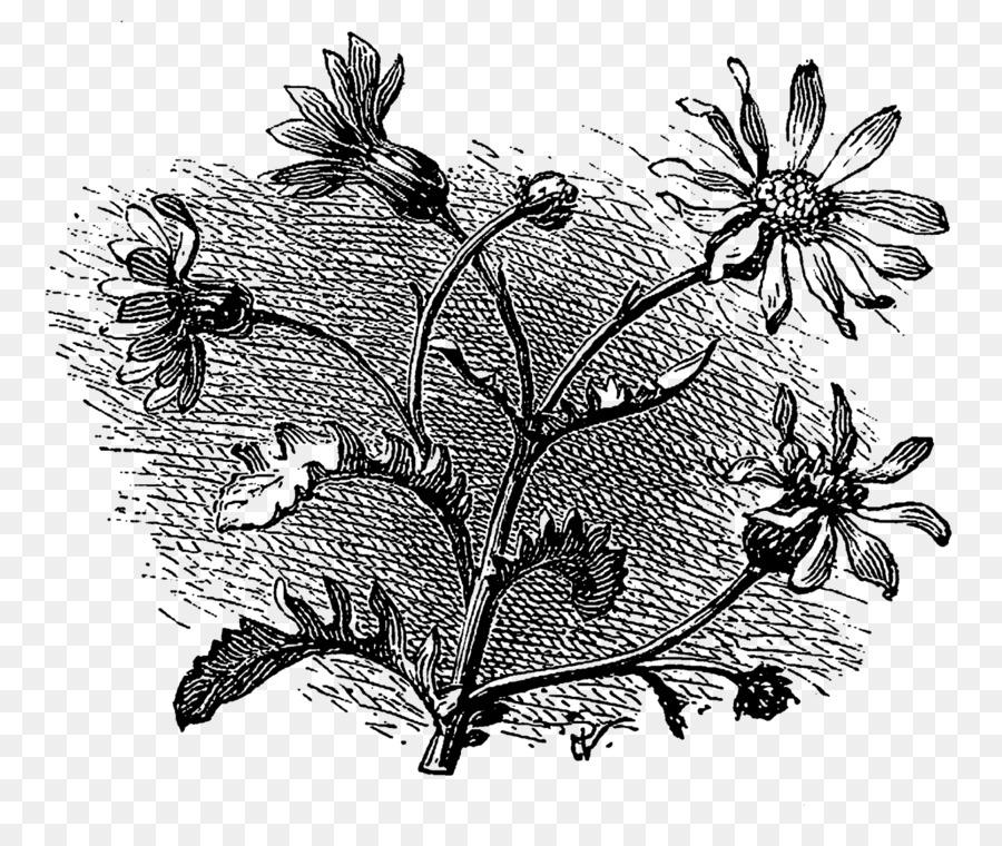 Buku Mewarnai Menggambar Seni Kebun Bunga Unduh Seni Monokrom