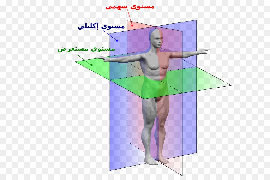 Anatómica plano de la Anatomía del plano Sagital plano Coronal plano ...