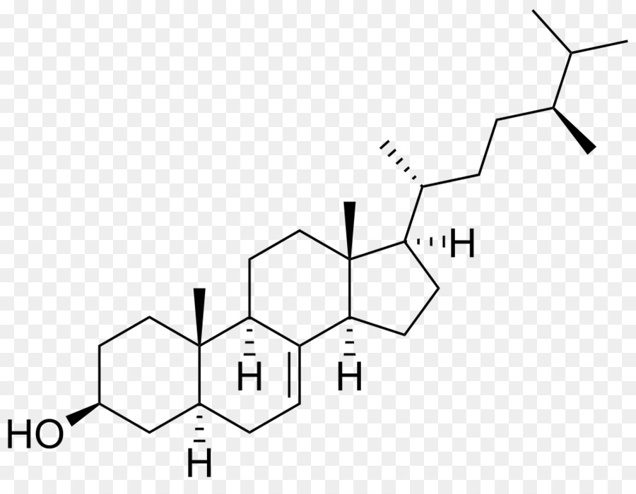 Androgen Receptor Anabolic Steroid Androstenedione