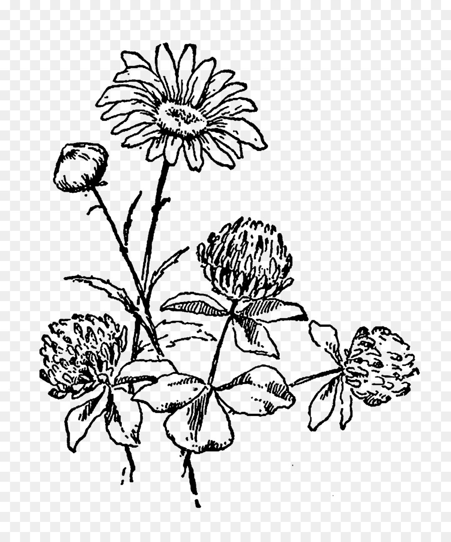 Flower Black And White Drawing Clip Art Flower Black Png Download