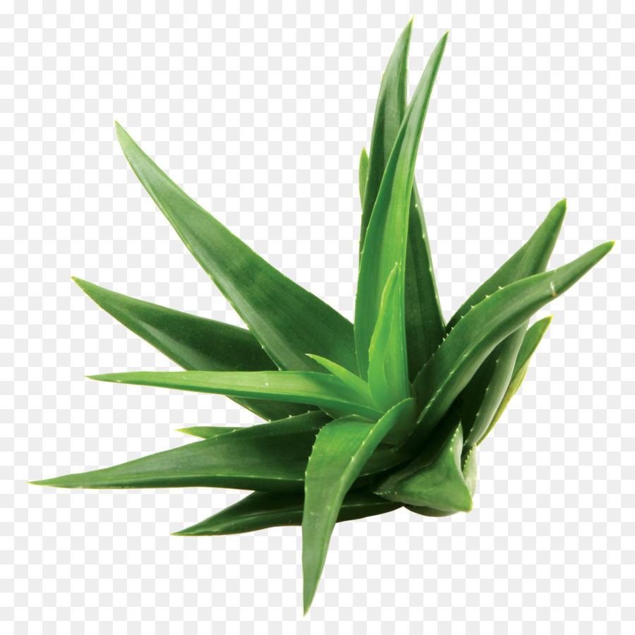 Cilde İyi Gelen Bitkiler