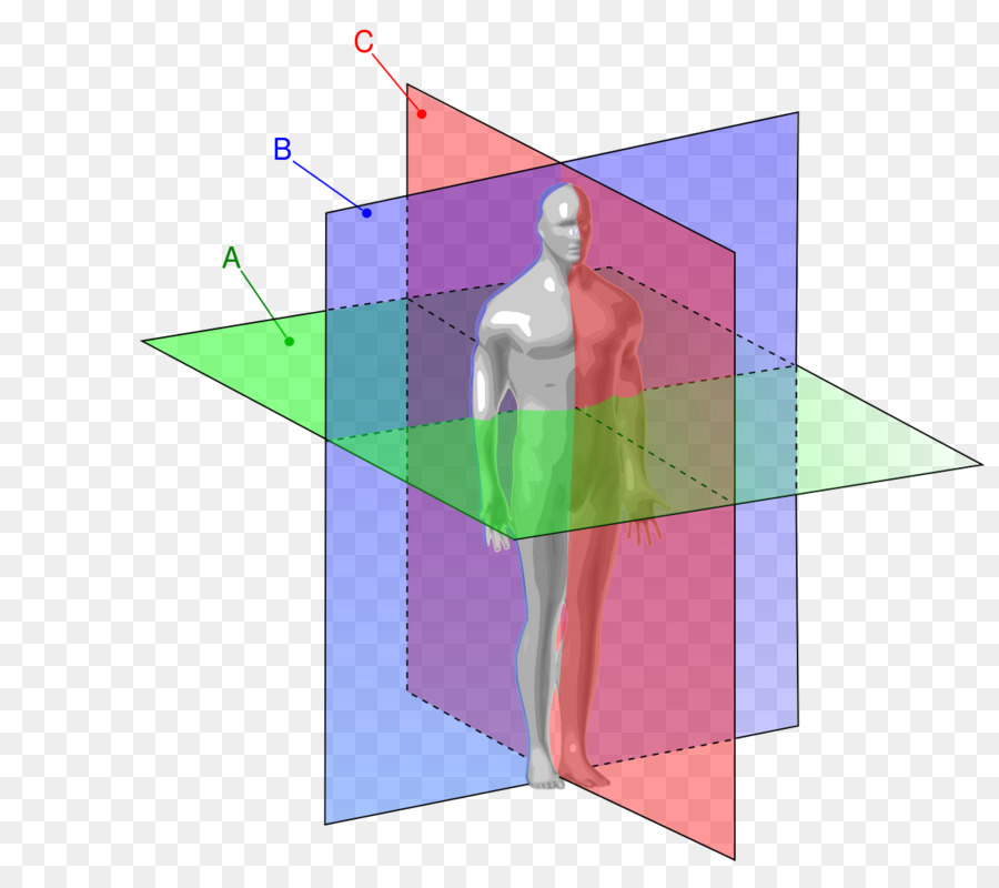 Anatomical Plane Anatomy Coronal Plane Transverse Plane Sagittal