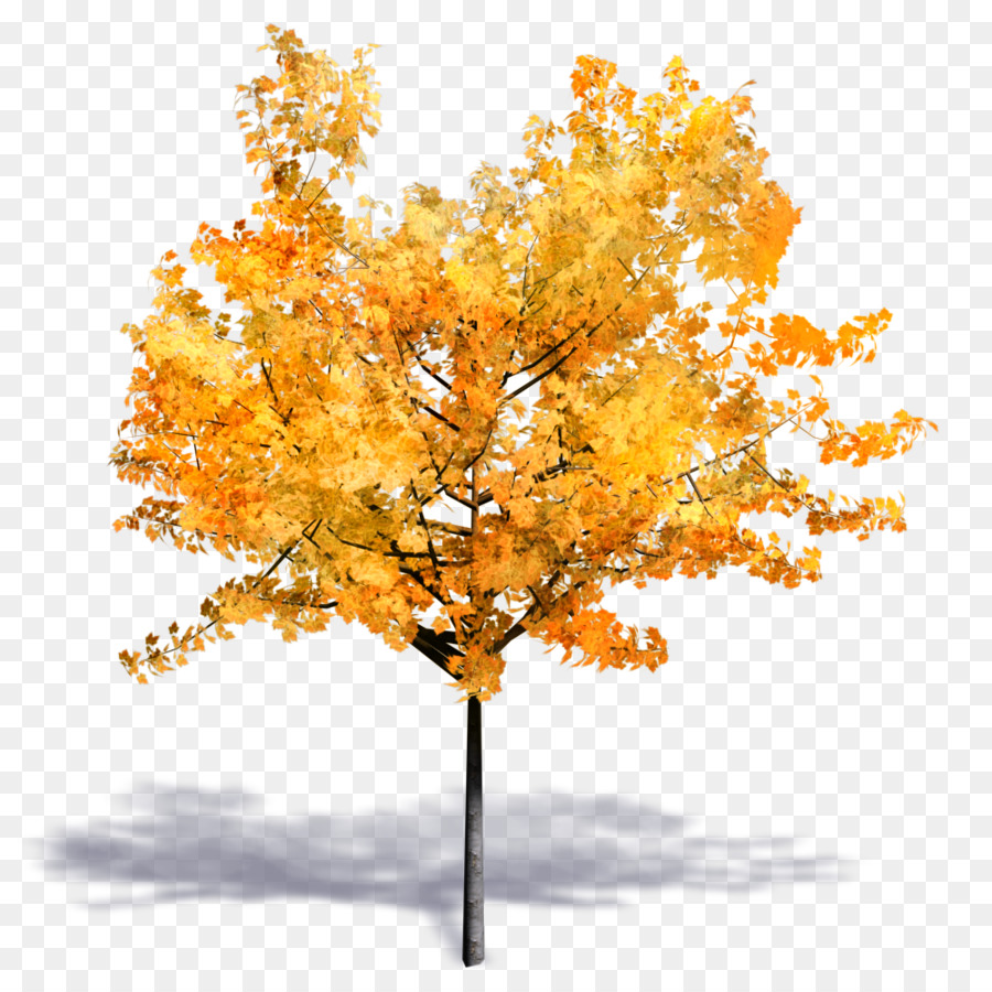 Tree Autumn png download - 1000*1000 - Free Transparent Tree png