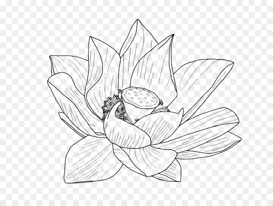 Nelumbo nucifera Flower Drawing Egyptian lotus Clip art - lotus ...