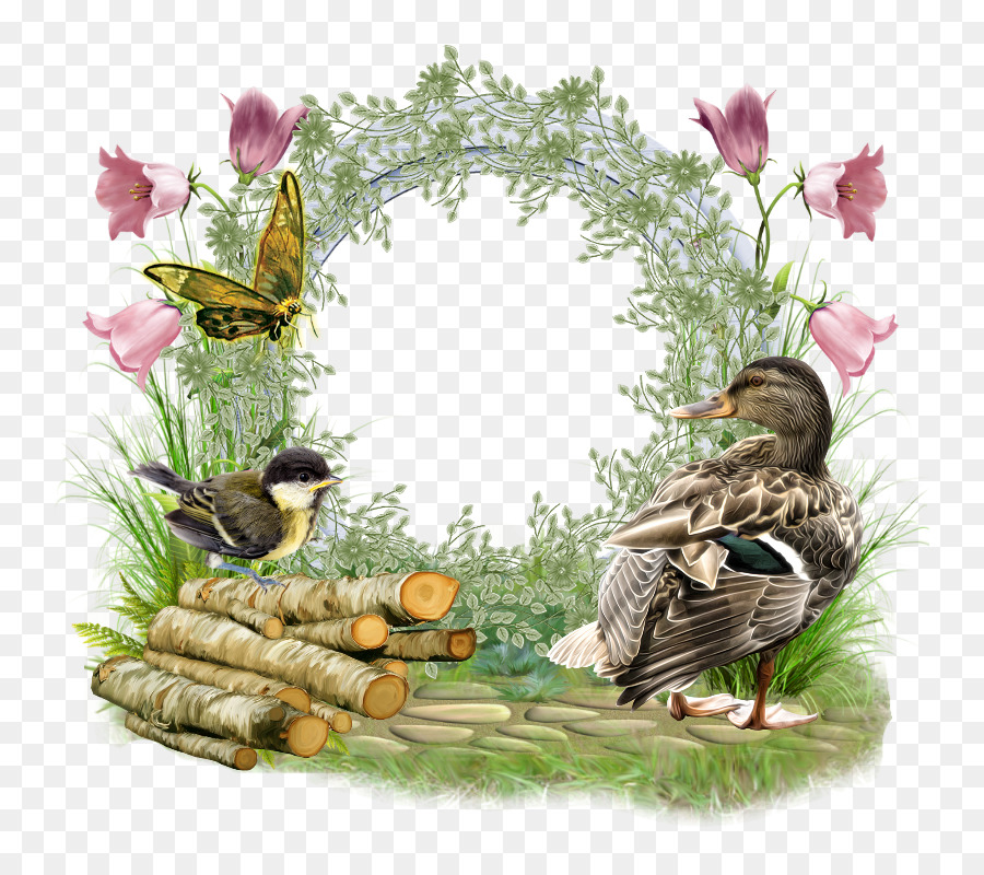 Water bird Friendship Duck Picture Frames - blog png download - 800 ...