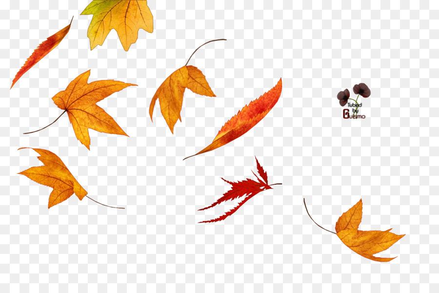 Otoño de color de las hojas en Invierno - tubo Formatos De Archivo ...
