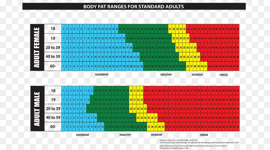 Körperfett-Anteil Fettgewebe Menschlichen Körper-Diagramm - Fett ...