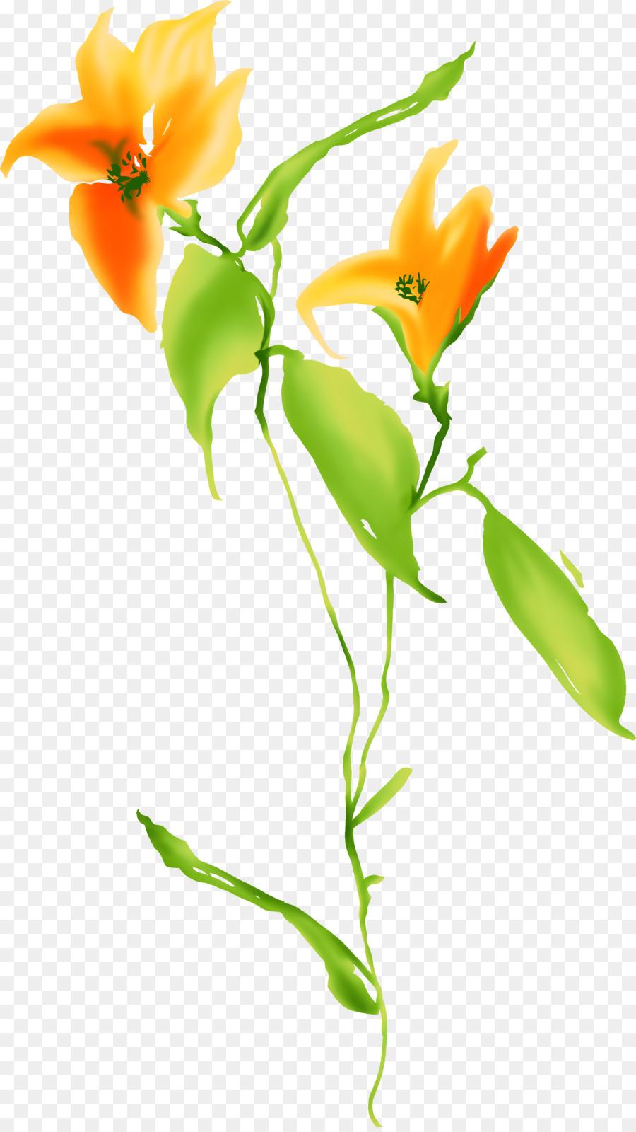 Flower Color Orange - orange flowers png download - 2289*4051 - Free ...