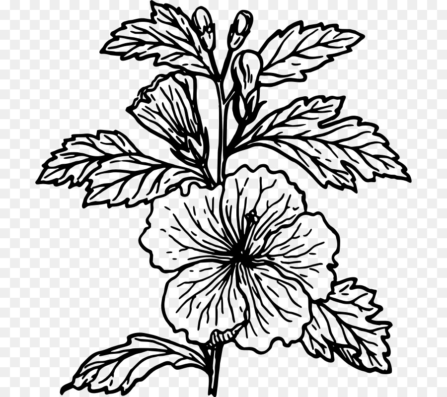 A Diagram Of How To Draw A Hibiscus Flower 42 Wiring Diagram