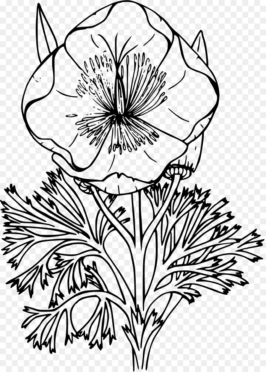California Poppy Drawing Coloring Book