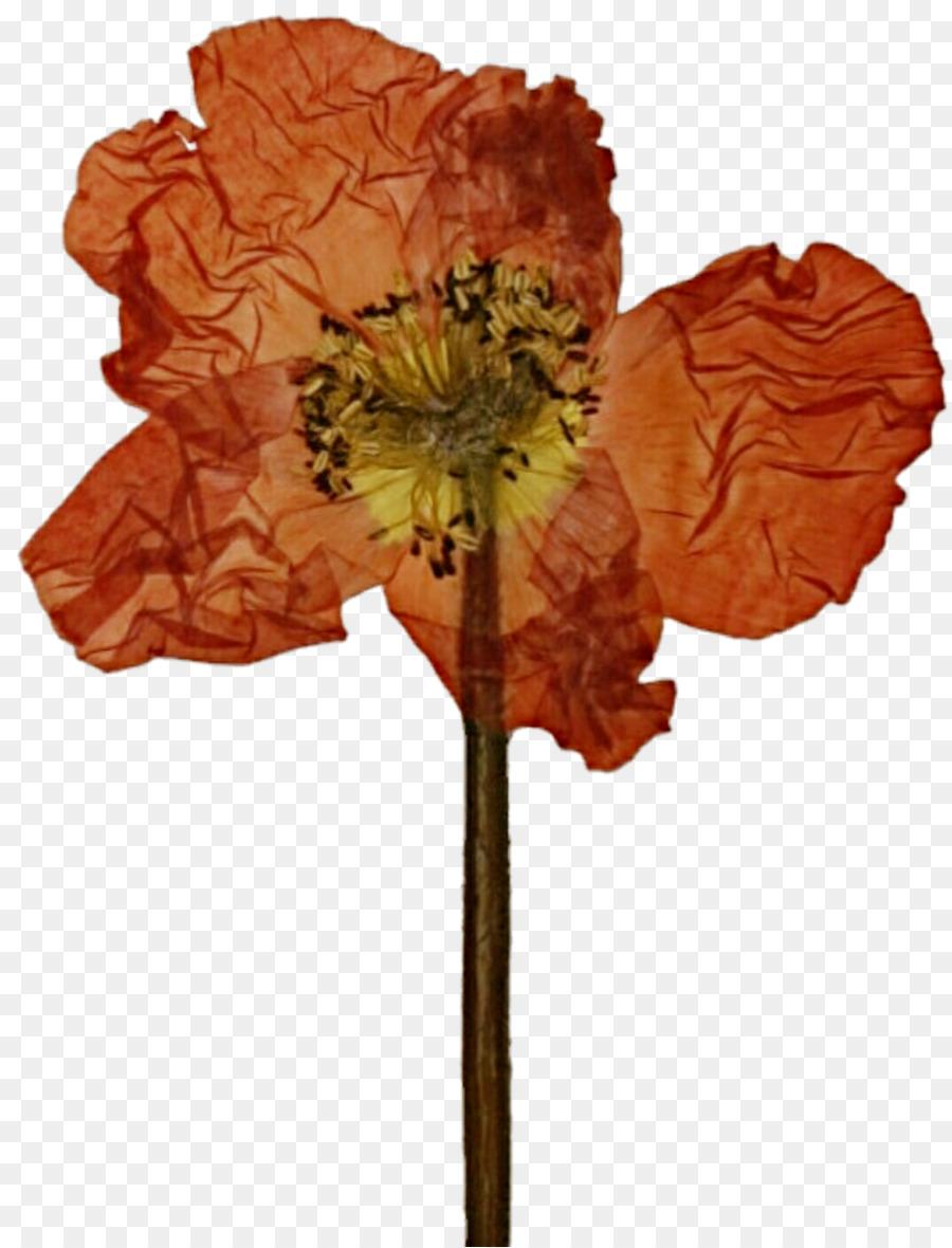 Pressed flower craft poppy cut flowers petal lotus flower png pressed flower craft poppy cut flowers petal lotus flower izmirmasajfo