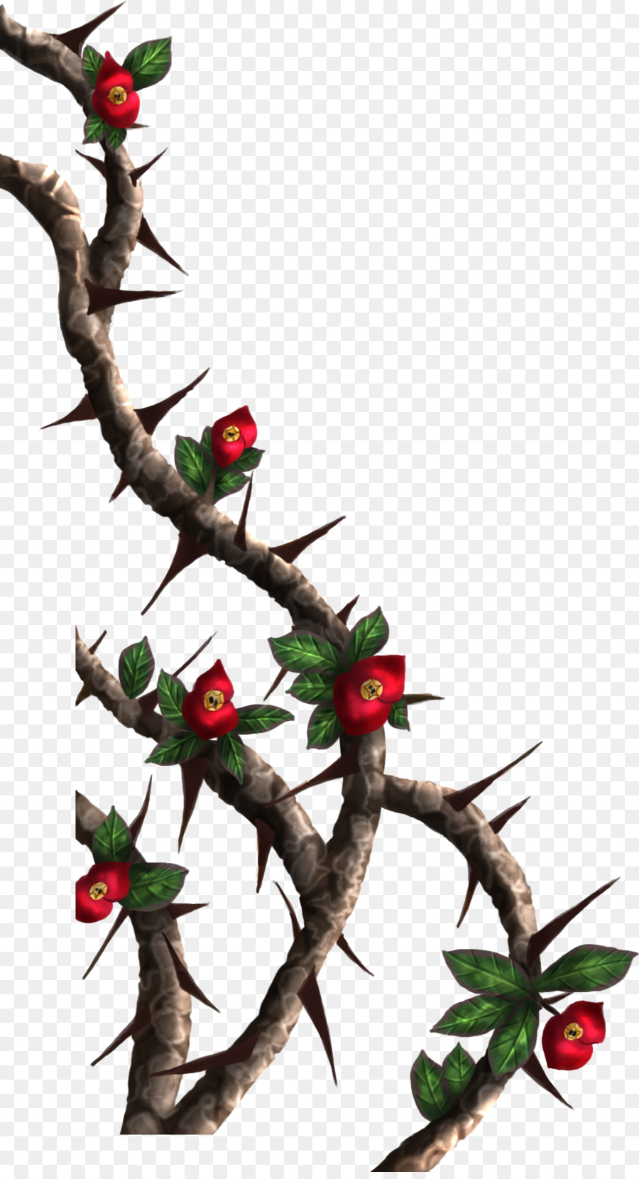 Thorns Spines And Prickles Rose Crown Of Drawing Clip Art