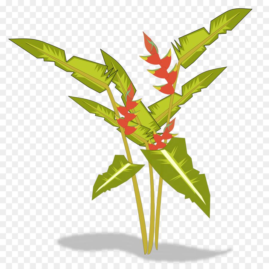 Bird Of Paradise Flower Heliconia Psittacorum Plant Clip Art   PARADİSE