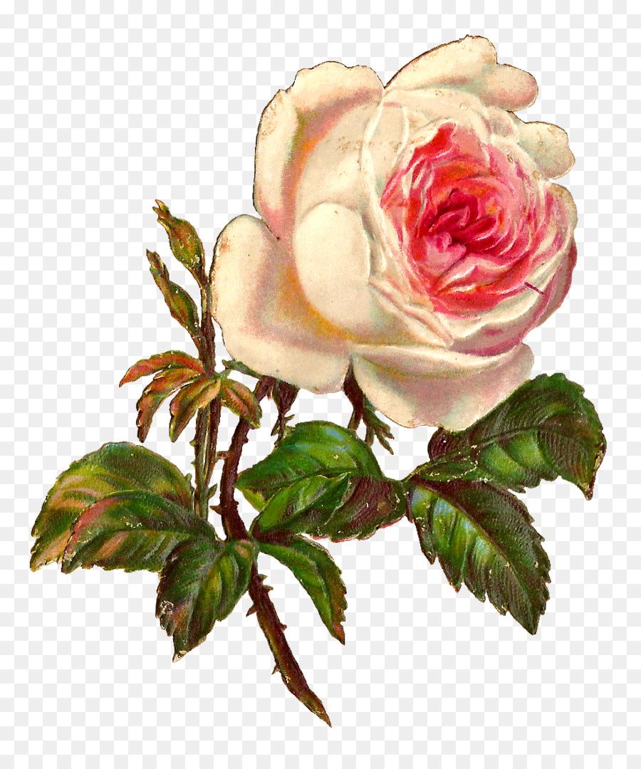 Rose Vintage Clothing Botanical Illustration Clip Art Shawl Png