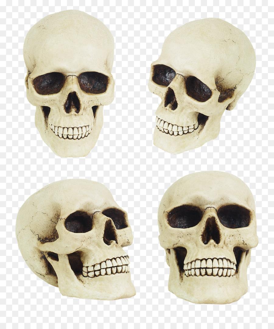 Skull Bone Anatomy Human skeleton - skull png download - 1085*1280 ...