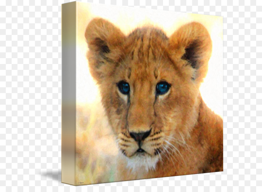cougar east african lion baby lions leopard lion cubs lion dance