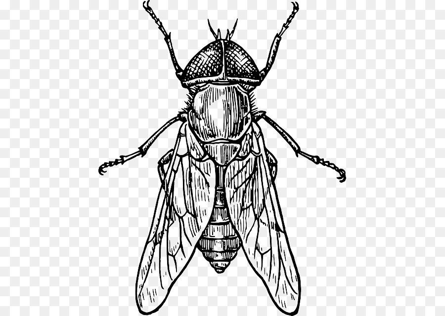 Escarabajo Cómo dibujar insectos Dibujo del ala de los Insectos ...