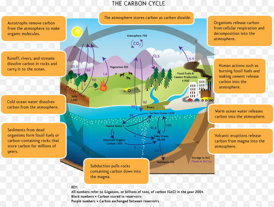 Carbon cycle global warming water cycle carbon dioxide biology carbon cycle global warming water cycle carbon dioxide biology cycle ccuart Image collections