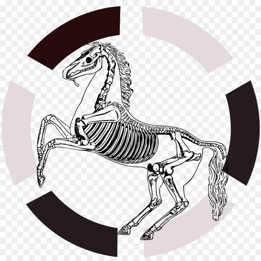 Caballo esqueleto Humano Anatomía del hueso Navicular - anatomía png ...