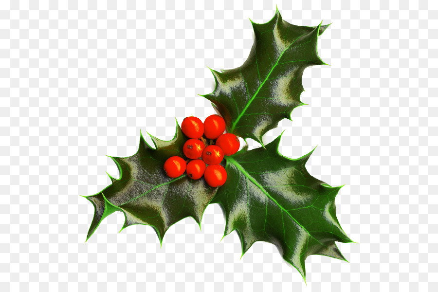 christmas decoration christmas and holiday season christmas plants common holly mistletoe