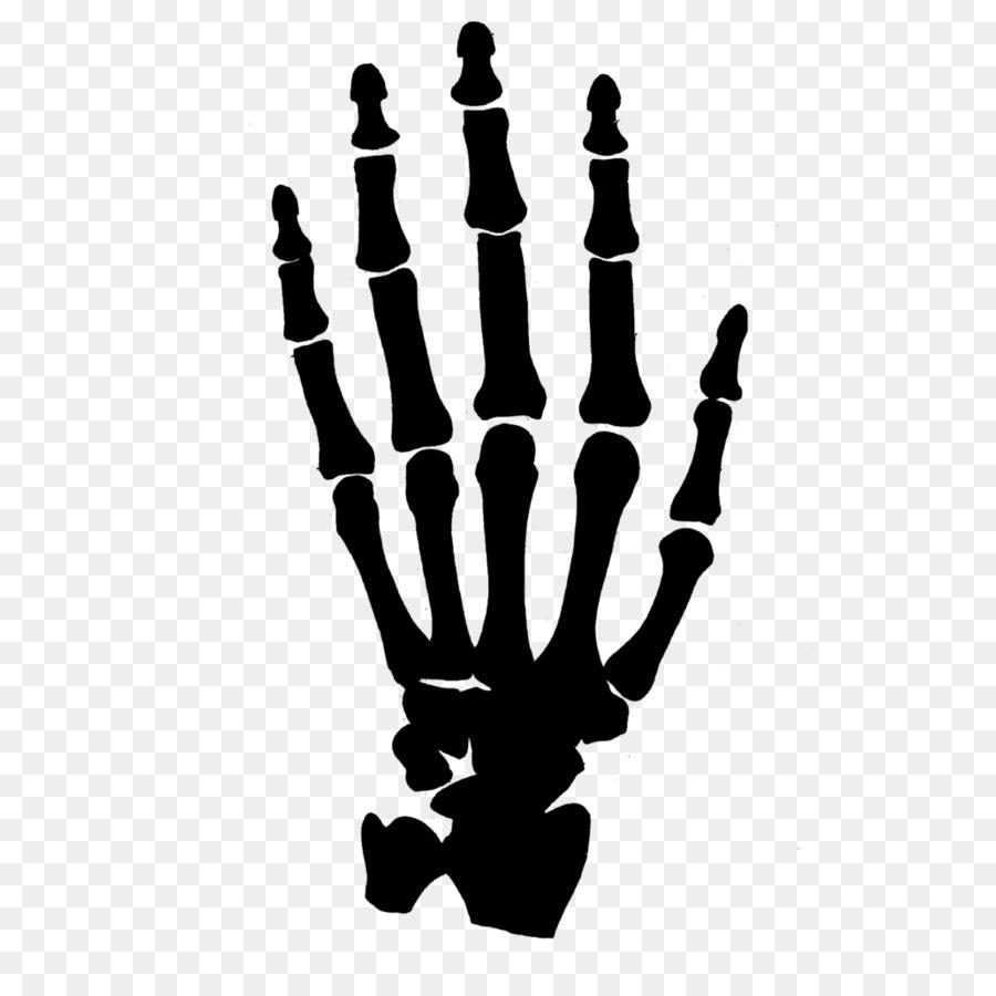 Human Skeleton Hand Clip Art Bones Png Download 894894 Free