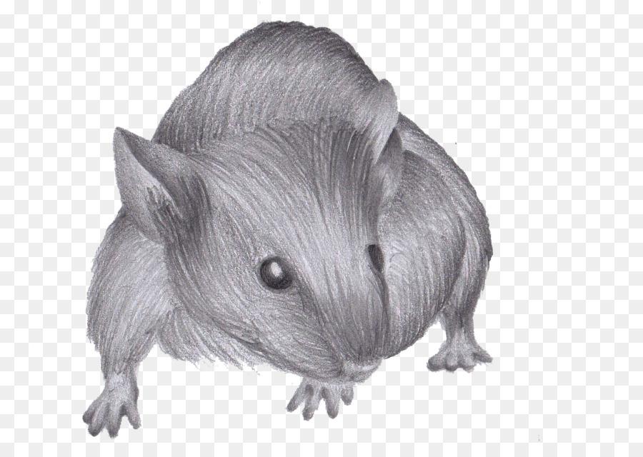 dibujo de cómo dibujar un ratón rata rata y ratón png dibujo