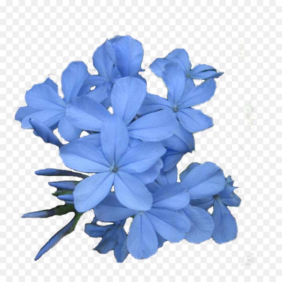 Flower jasmine arum lily lavender plant callalily png download flower jasmine arum lily lavender plant callalily izmirmasajfo