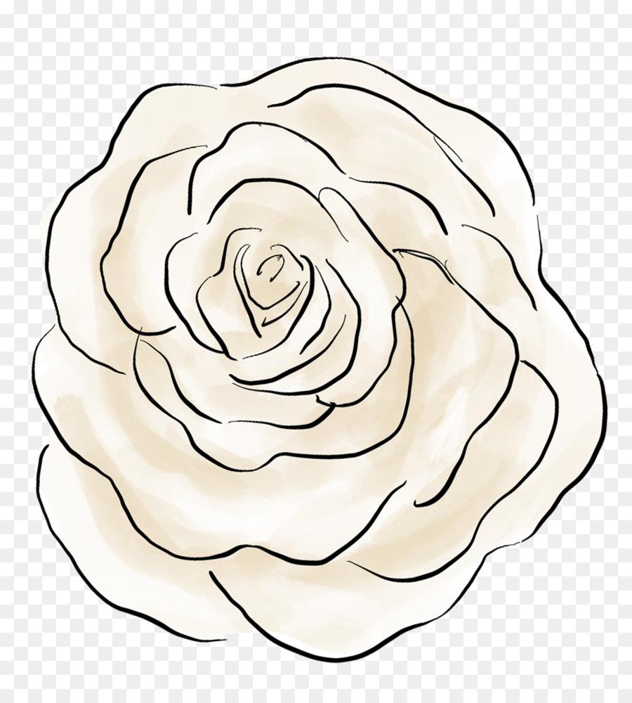 Las flores de corte, Dibujo de las Rosáceas Rosa - la teoría del big ...