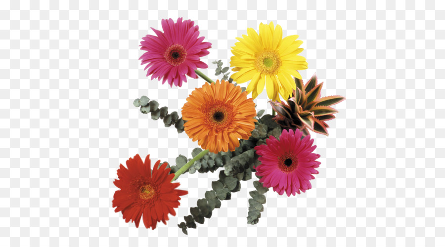 Flower bouquet Transvaal daisy Cut flowers Clip art - gerbera png ...
