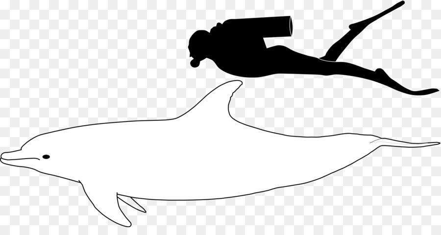 [Koleksi Terbaik] Sketsa Gambar Hewan Lumba Lumba