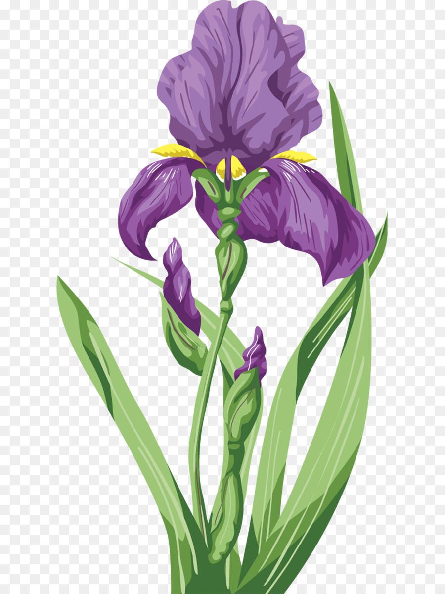 Irises Flower Wall Iris Purple Iris Png Download 6731200 Free