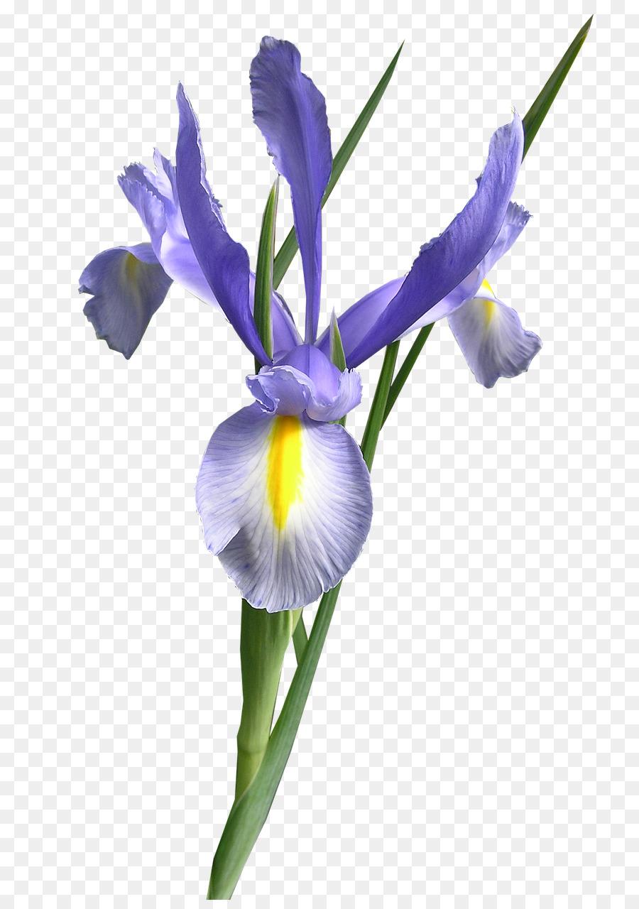 Cut flowers iris versicolor iris png download 8221280 free cut flowers iris versicolor iris izmirmasajfo