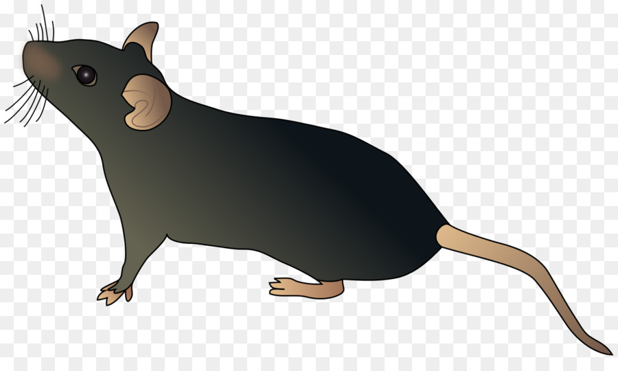 Computer Mouse Rat Schematic Rat Mouse Png Download 1280 747