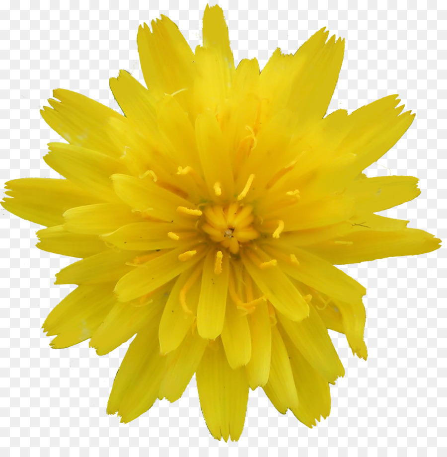Paper Flower Information How To Napkin Folding Yellow Flowers Png