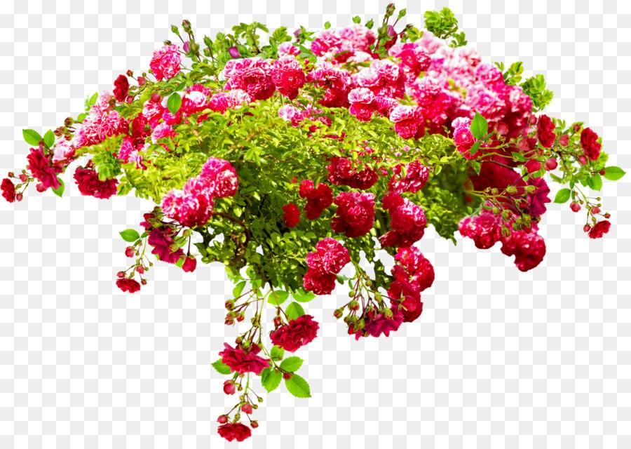 Birthday Flower bouquet Daytime International Day for Older Persons ...